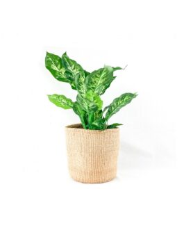 Sisal Tan/Natural Medium Planters